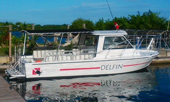 Fun Diving & Specialty Courses On The