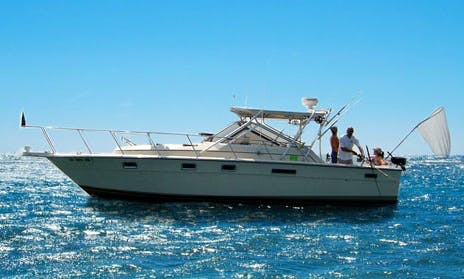 "31ft ""Mr. Muskie Too"" Tiara Fishing Charter in Clair Shores, Michigan"