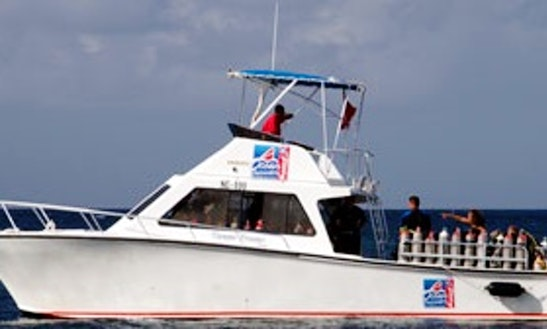 Boat Diving And Animal Encounter Dive Trips In Willemstad, Curacao