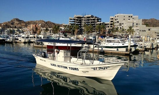 Wildlife Tour Boat In Cabo San Lucas