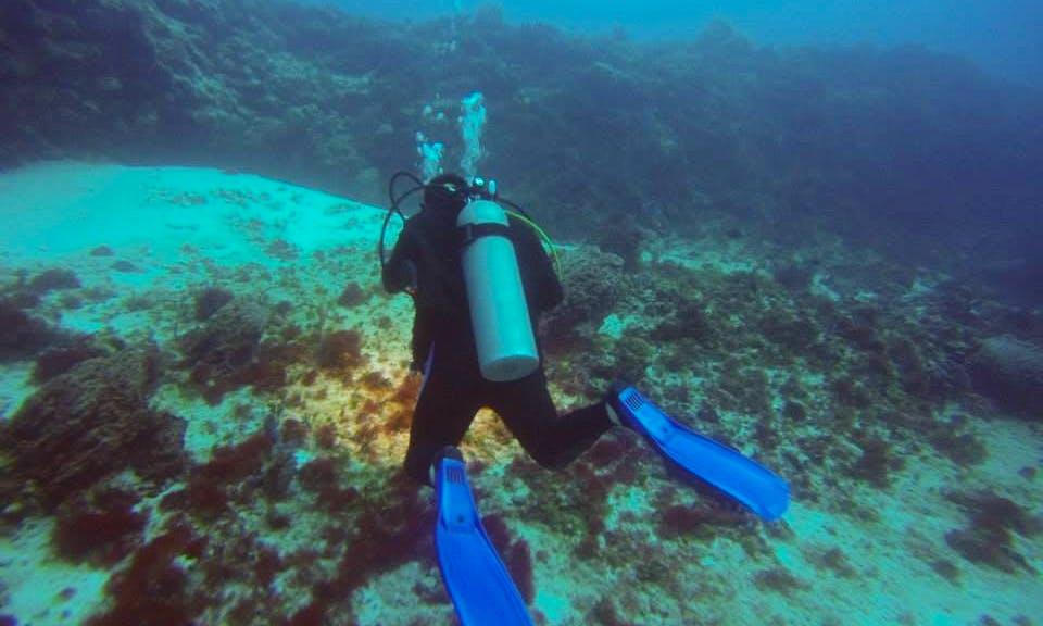 Boat Diving Trips  PADI in Playa del Carmen