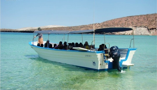 Sightseeing And Wildlife Tour In Baja, Mexico
