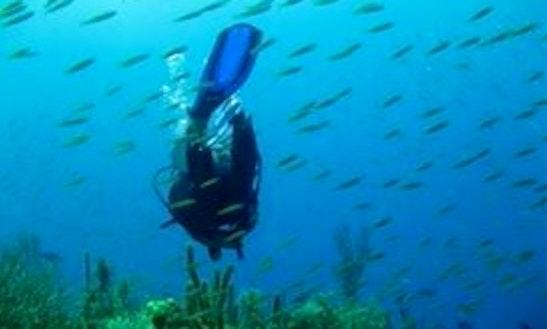 Scuba Diving In Bay Islands