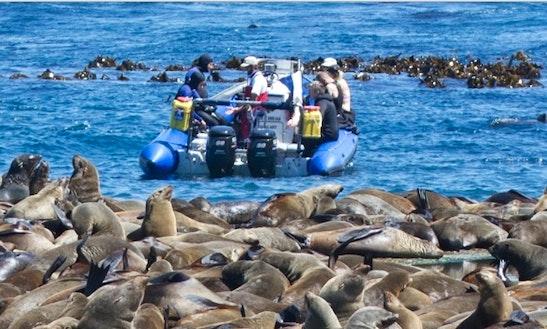 Seal Snorkeling Trips In Postmasburg