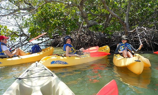 Unforgettable Kayaking  Experiences In Naples, Florida