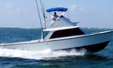 Fishing Charter On 31ft Bertram Sport Fisherman Yacht With Captain Ira