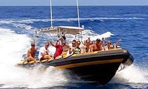 Dolphin/Whale Watch Tours In Honolulu
