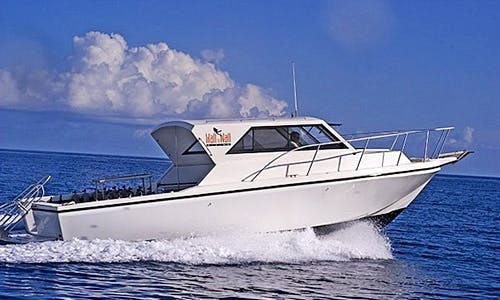 "36ft ""Chelonia"" Cuddy Cabin Diving Charter in George Town, Cayman Islands"