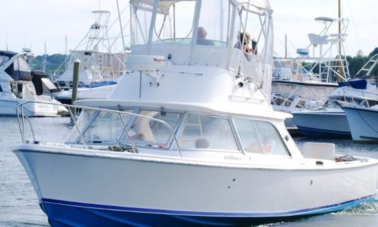31' Sport Fisherman Charter In Homer, Alaska
