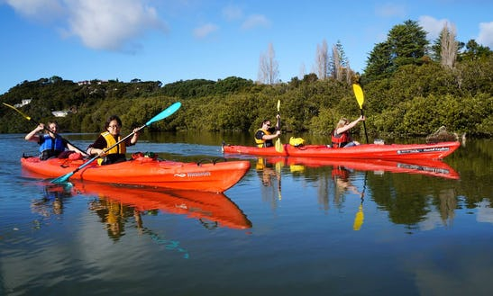 Guided Kayaking Trous In Paihia, New Zealand