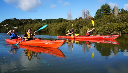 Guided Kayaking Trous In Paihia, New Zealand