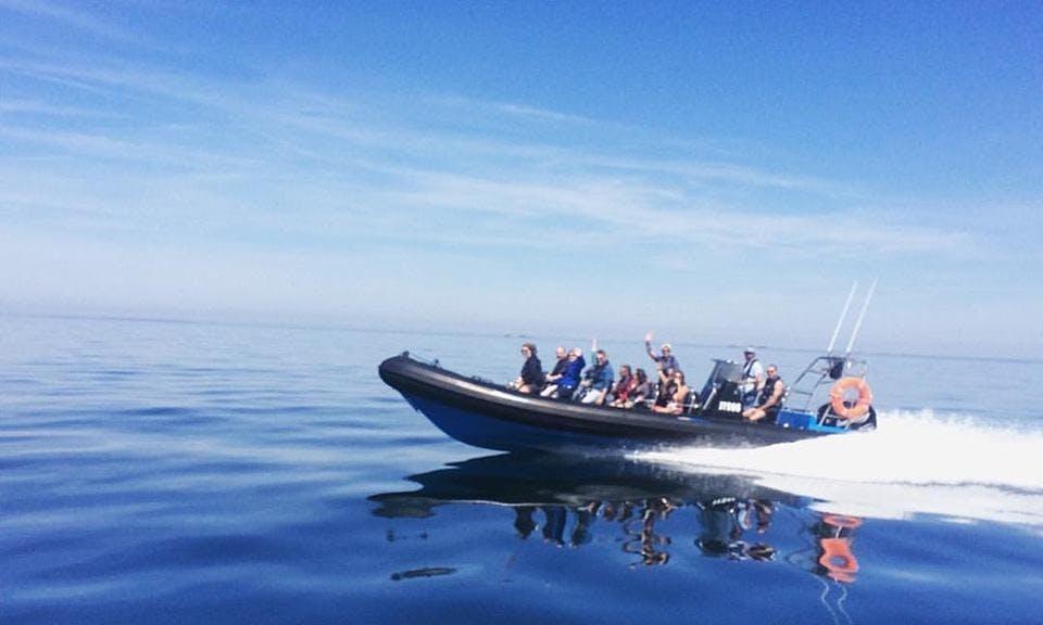 Seafari Falcon boat for an awesome wildlife tour