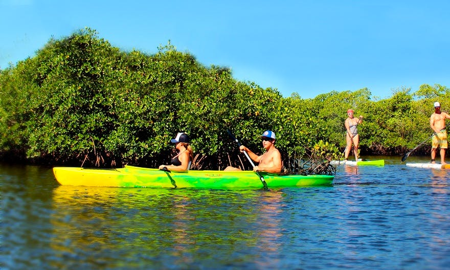 2 Hours Kayak Eco-Tours with Experienced Guide from Sarasota, Florida