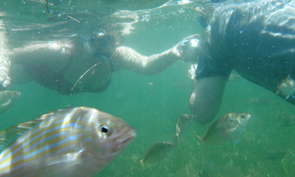 Snorkeling Trips South Padre Island