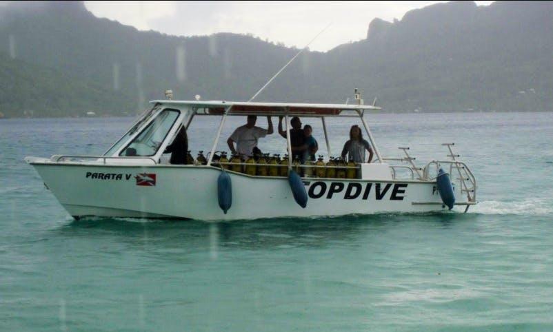 Dive Boat In Bora Bora, Vaitāpē