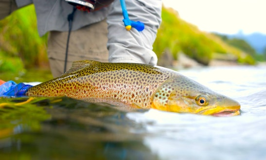 Guided Fly Fishing In Wanaka And Queenstown, New Zealand