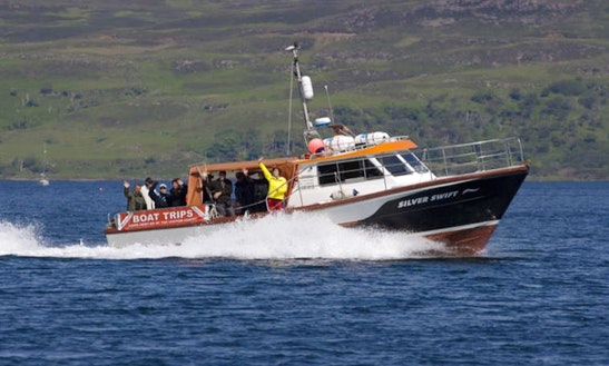 Whale Watch Tours In Tobermory