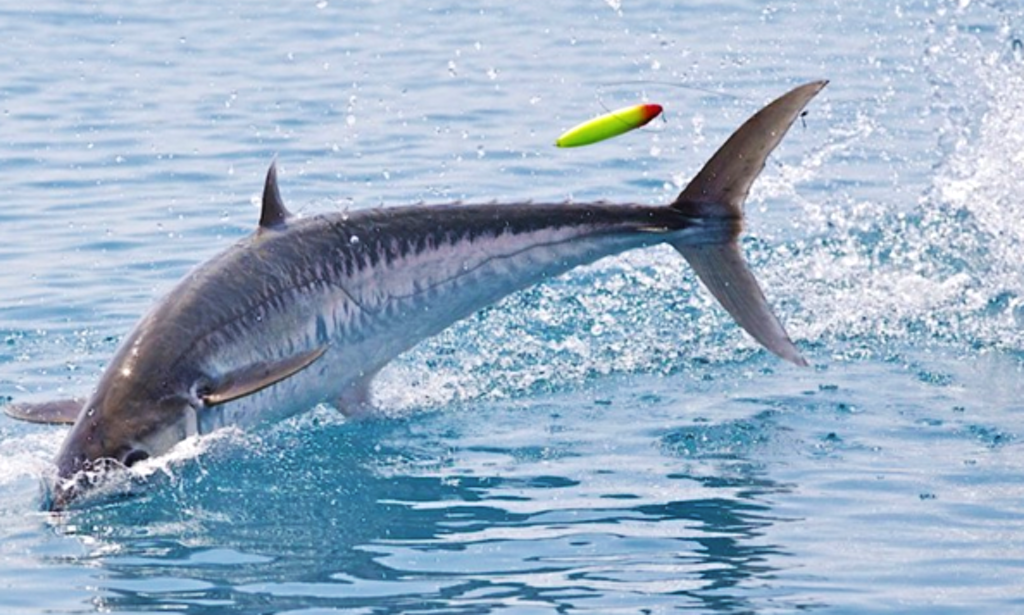 Galveston west bay fishing charters all the best fish in for Good fishing spots in galveston