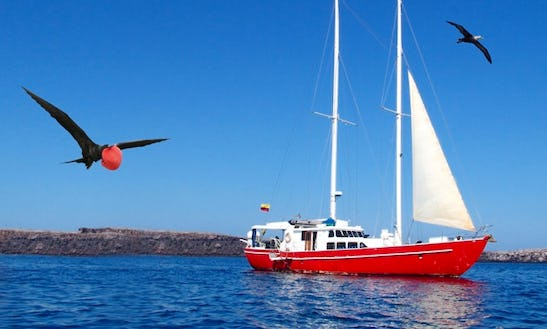 Five Day Cruise Liveaboard In Galapagos