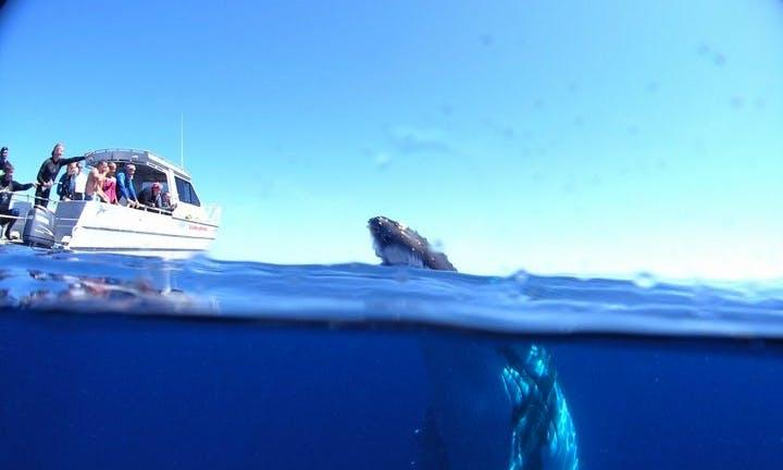 Catamaran Diving Trips and PADI Courses 'Avanti' in Forster