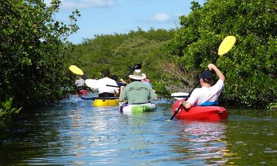 Rent A Single Kayak To Explore The Jim Neville Preserve In Siesta Key, Florida
