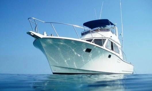 The Reef Encounters Boat Dive Trip