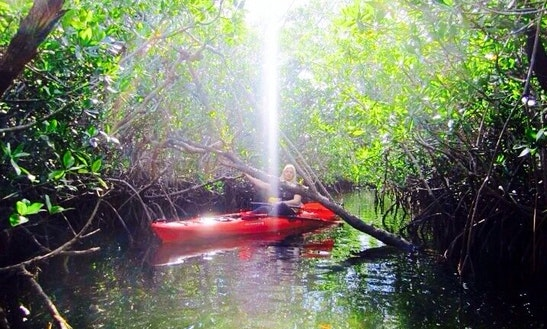 Kayak Rental & Guided Tours In Key Largo