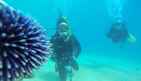 Scuba Diving Certification Courses In Podstrana