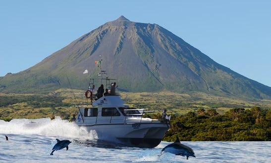 Scuba Diving In Azores