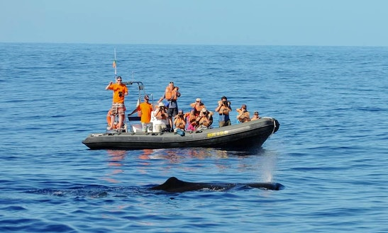 Whale Watching Tour In Azores