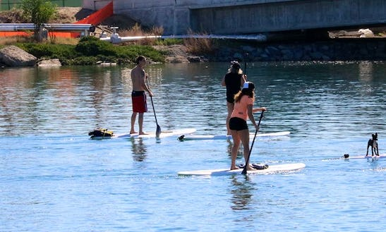 Amazing Paddleboard Rental And Lessons In Point Loma, San Diego