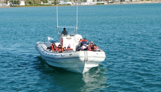 Whale Watching Rib Tours In Puerto Madryn