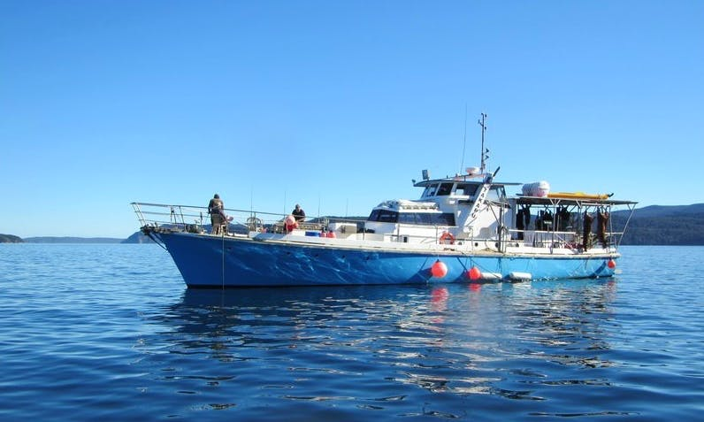 Fishing Charter on 'M.V. Takapu' Yacht in Timaru, New Zealand
