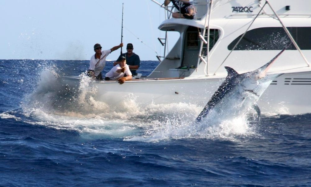 Fishing charters auckland auckland fishing charters for Fishing charters auckland