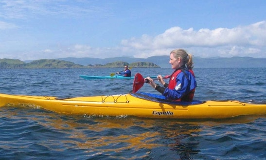 Guided Sea Kayaking Trip In Auckland