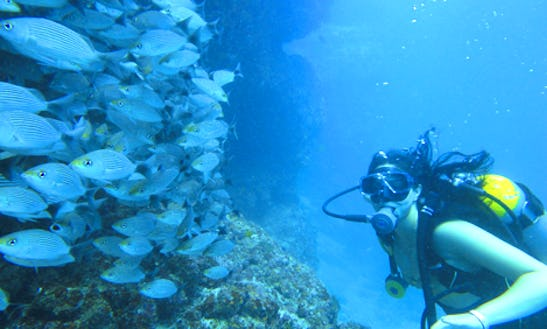 Diving Trips In Puerto Vallarta, Mexico