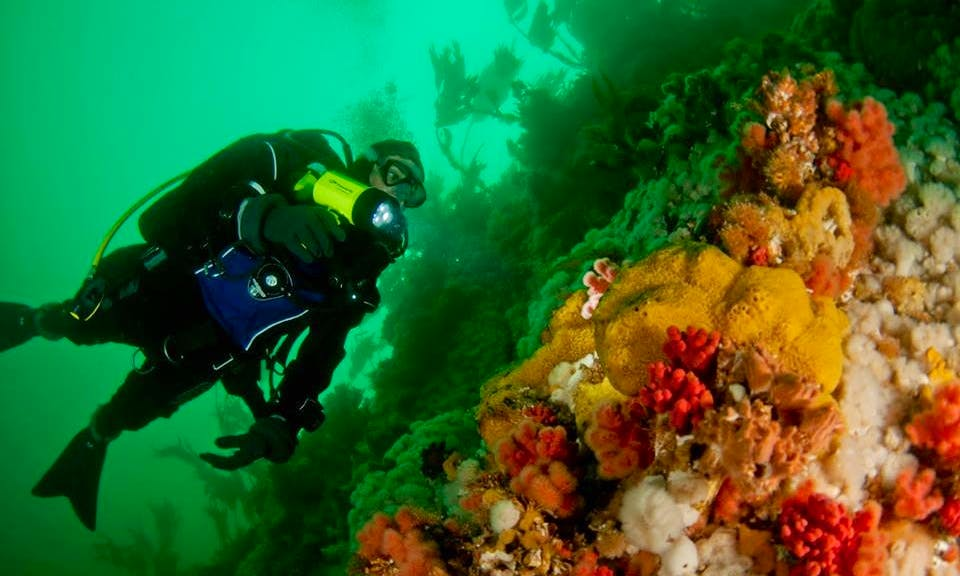 Diving Trips in Nanaimo, Canada
