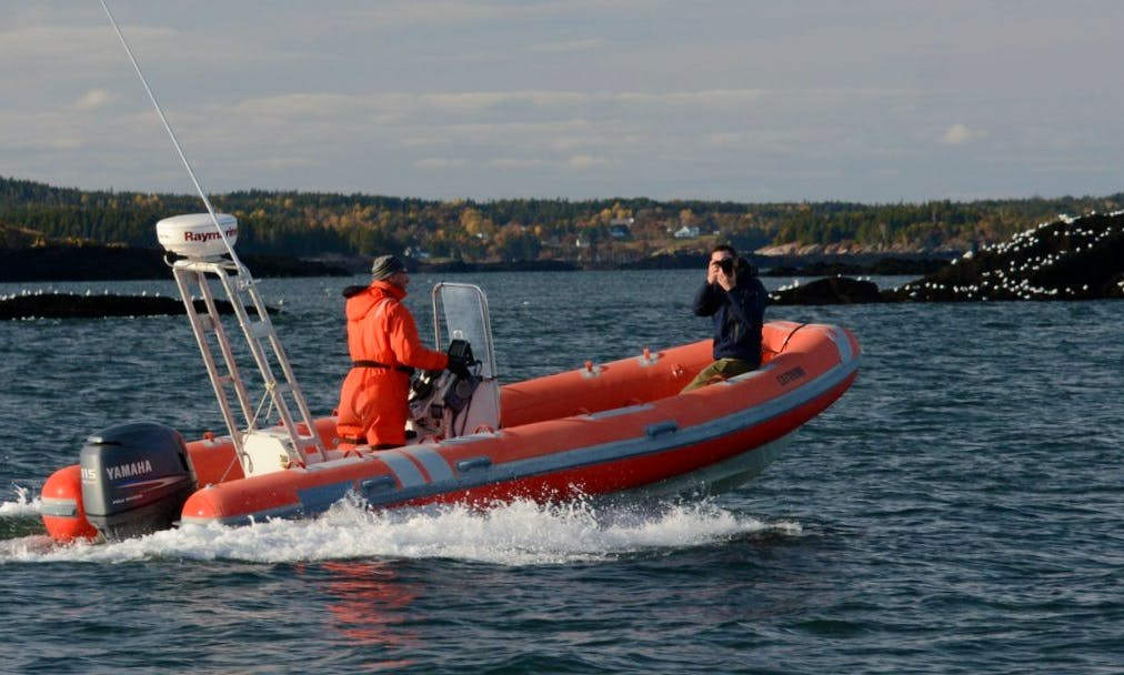 RIB Whale Watching Trips in Saint Andrews, Canada