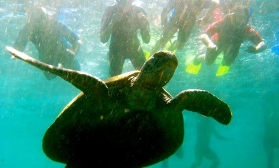 Snorkel With Turtles Tour In Kingscliff