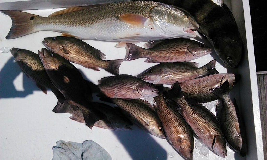 Enjoy fishing in fort myers beach florida on 27 39 carolina for Fishing charters fort myers florida