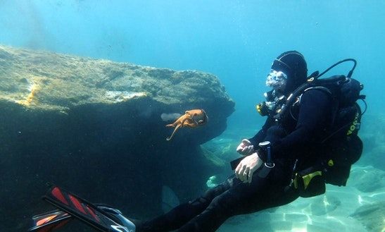 Diving Trips & Padi Courses In Iraklio