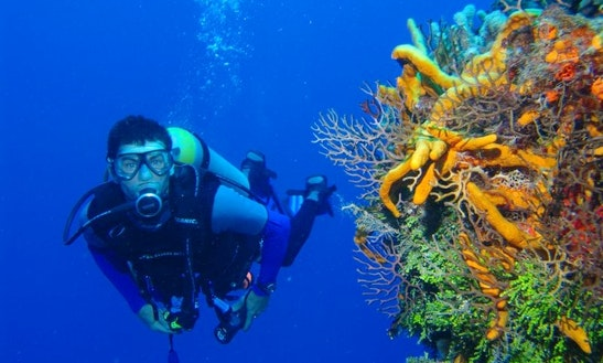 Diving Exploration Trips & Training In Linguizzetta