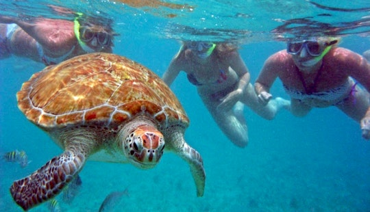 Snorkeling With Turtle On Akumal Bay