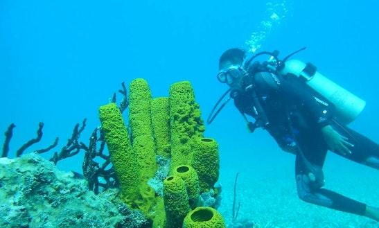 Diving & Snorkeling Trips In Jurand