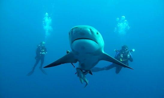 'black Pearl' Diving & Padi Courses In Margate
