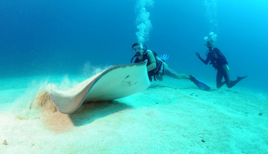 Scuba Diving Trips & Padi Courses In Simpson Bay