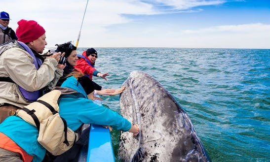 Whale Watching Tours In La Paz