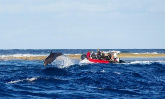 Rib Diving Trips In Tuamotu-gambier, French Polynesia