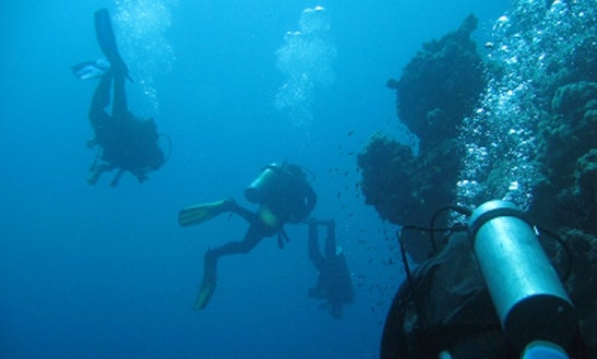 Fun Diving Trips In Tejakula