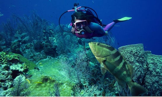 Try Scuba Diving In Paros
